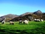 Sheep_near_Zugarramurdi_basquecountrywalks