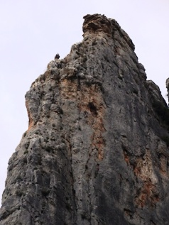 Griffon vulture high up on the rockface_basquecountrywalks