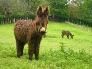 Day_3_Donkey_Zugarramurdi