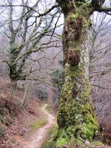 Day_6_Iñarbegi_path