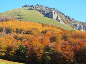 Day_7_Mendaur_autumn